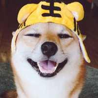 漂亮的一猫一狗搞笑情头头像