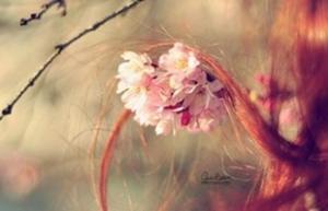 不带符号的唯美游戏名字:普罗旺斯の花香