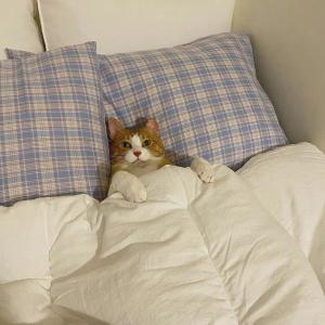 宠物猫躺着睡觉头像