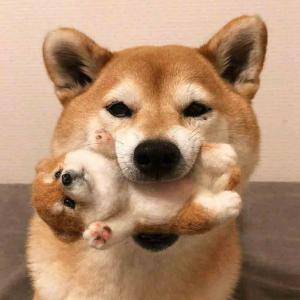 适合当头像的狗狗图片
