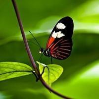 一个关于蝴蝶的梦_蝴蝶飞飞唯美个性头像