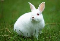 兔子图片大全可爱 一蹦一跳的十分有趣