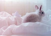 兔子图片大全可爱 动来动去