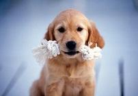 狗狗图片大全可爱 好想要